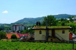 weekend-fotografie-sangeroz-bai-11